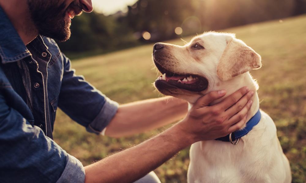 Eu Amo Meu Pet! Estar Com Animais Pode Ajudar