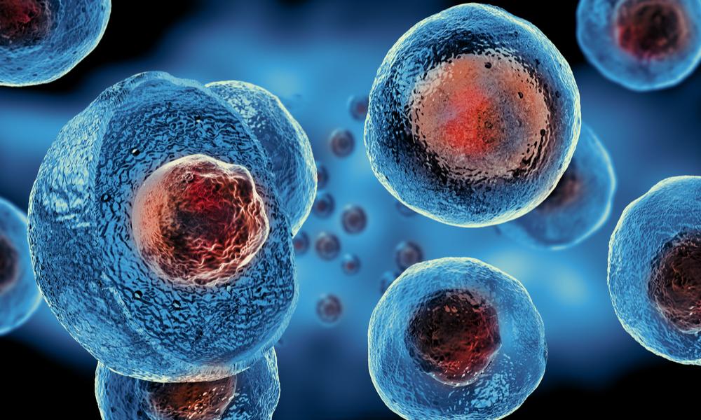 O Que São As Famosas Células-tronco?