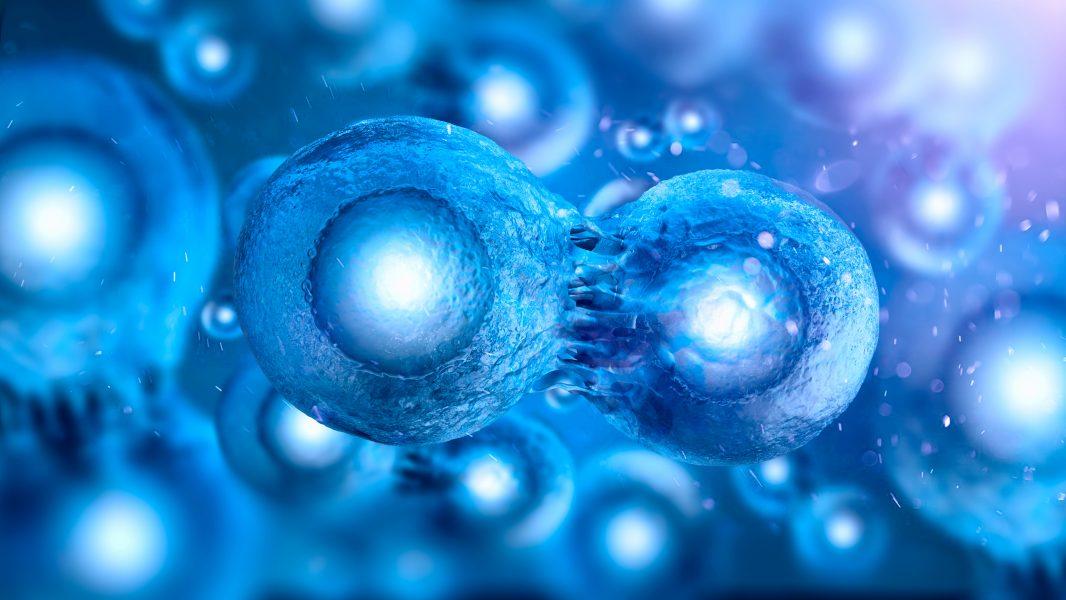 células-tronco; leucemia; câncer;celulas tronco