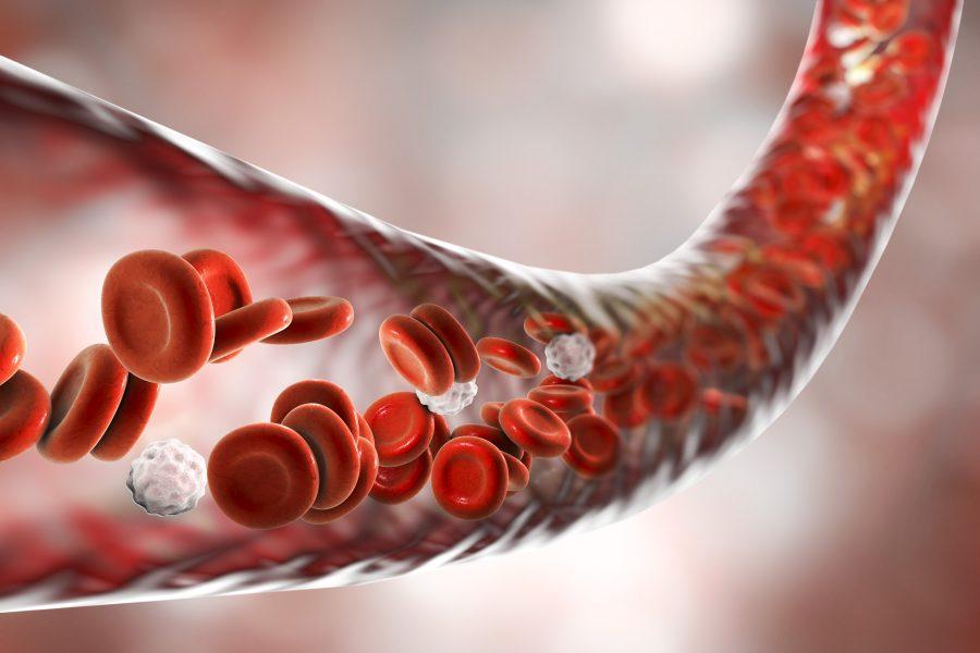 trombocitemia essencial, trombocitose essencial, trombocitemia essencial é cancer, trombocitemia, trombocitopenia essencial, o que é trombocitopenia, trombocitopenia o que é, trombocitemia essencial tem cura, plaquetose, o que e trombocitopenia, trombocitose o que é, o que é trombocitose, causas de trombocitose, trombopenia, mutação jak2, trombocitose é grave, trombocitopenia significado, o que significa trombocitopenia, plaquetose causas, o que trombocitopenia, neoplasia medular, trombocito, o que é plaquetose, trombócitos, trombocitos, causas de trombocitopenia, origem das plaquetas, plaquetas ou trombócitos, o que são as plaquetas, o que é coagular, o que são plaquetas no sangue, oq sao plaquetas, sangue componentes, infecção no sangue pode virar leucemia, trombocitemia essencial é neoplasia maligna, trombocitemia essencial alimentação, plaquetas, plaquetas altas, contagem de plaquetas, qual a função das plaquetas, plaquetas ideal para ser humano, plaqueta, plaquetas no sangue, função das plaquetas, plaqueta sanguinea, numero de plaquetas, produção de plaquetas, formação das plaquetas, numero normal de plaquetas, plaquetas, trombose, trombose tem cura, sintomas da trombose, o que causa trombose, trombose tratamento, causas da trombose