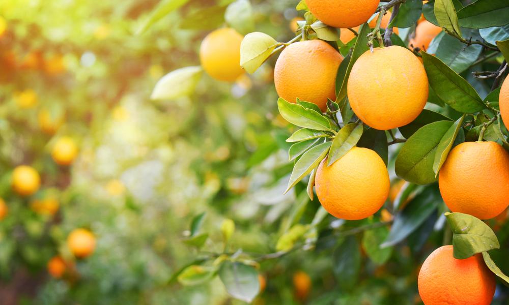 Laranja, Vitamina C, Vitamina C Previne Leucemia, Laranja Previne Câncer