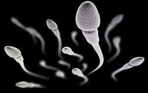 fertilização, fertilidade, especialista em fertilidade, banco de sêmen valor, banco de sêmen quanto custa, congelamento de óvulos pelo sus, tratamento de fertilidade, fertilidade da mulher, gravidez na menopáusa precoce, o que é fertilidade, estimulação ovariana, tratamento fertilidade, centro de fertilidade, clinica de fertilidade, clínica de fertilidade, exames de fertilidade, quando engravidar, congelamento de ovulos, masturbação engravida, tempo de vida do ovulo, tratamento hormonal para engravidar, preparar endometrio para transferencia congelados, quanto custa congelar óvulos, exame fertilidade feminina sangue, aumentar fertilidade feminina oncofertilidade, quimioterapia ou radioterapia, remédio para induzir ovulação, o que é fertilidade, fertilidade e vida, fertilidade o que é, preservação da fertilidade, o que é fertilização, fertilização natural, tipos de fertilização, o que significa in vitro, processo de fertilização, engravidar, quimioterapia vermelha, tratamento para engravidar, ovulos, tipos de quimioterapia, gravidez na menopáusa, quimioterapia tipos, chances de engravidar, fertilidade feminina, probabilidade de engravidar, como saber se posso ter filhos, mulher operada pode engravidar, como aumentar a chance de engravidar, riscos de engravidar, chance de engravidar, tratamento para engravidar, qual a probabilidade de engravidar, se preparando para engravidar, cancer e fertilidade, filhos depois do cancer, engravidar depois do cancer, filho depois do cancer