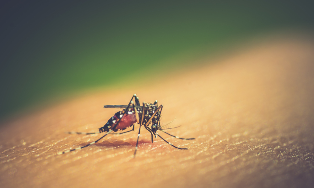 Dengue, Sintomas De Dengue, Mosquito Da Dengue, Dengue Sintomas, Sintomas Dengue, Tratamento Da Dengue, Dengue Tratamento, Quais Os Sintomas Da Dengue, Dengue Sintomas Iniciais, Prevenção Da Dengue, Prevenção Da Dengue, Manchas De Dengue, Dengue Sintomas E Tratamento, Tipos De Dengue, Dengue Prevenção, O Que é Dengue, Sintomas Da Dengue Hemorrágica, Como Prevenir A Dengue, Como Prevenir A Dengue, Tratamento Dengue, Sintomas De Dengue Hemorrágica, Transmissão Da Dengue, Quantos Dias Dura A Dengue, Vírus Da Dengue , Causas Da Dengue, Como é Transmitida A Dengue, Dengue Agente Causador, Dengue Tem Cura Dengue Diagnostico, Qual O Tratamento Para Dengue, Supressão Da Medula óssea, Como Tratar A Dengue, Fui Picado Pelo Mosquito Da Dengue O Que Fazer, Dengue Pega, Como Se Pega Dengue, Manchas Roxas Pelo Corpo, Como Pega Dengue, Como Curar A Dengue, Como Pegar Dengue, Dengue Tempo De Cura, Dengue Tem Cura?, Vacina Dengue, Vacina Contra Dengue, Vacina Da Dengue, Vacina Para Dengue, Existe Vacina Contra Dengue, Qual A Leucemia Mais Perigosa , Manchas Roxas De Leucemia Doem, Como Se Pega Cancer, Imunidade Baixa Pode Causar Leucemia, Sangramento Na Gengiva Leucemia, Sangramento Na Gengiva Leucemia, Leucemia Prevenção, Prevenção Da Leucemia, Prevenção Para Leucemia, Leucemia Causas Sintomas E Prevenção, Prevenção De Leucemia, Leucemia Causas, O Que Causa A Leucemia, O Que Causa Leucemia, Causas Da Leucemia, Leucemia Mieloide Aguda Fatores De Risco, Fatores De Risco Da Leucemia, Fatores De Risco Leucemia, Fatores De Risco Para Leucemia, Fatores De Risco Para Leucemia Mieloide Aguda, Leucemia Fatores De Risco, Plaquetopenia, O Que é Plaquetopenia, Plaquetas Baixas, Plaqueta Baixa, Plaquetas Baixas O Que Pode Ser