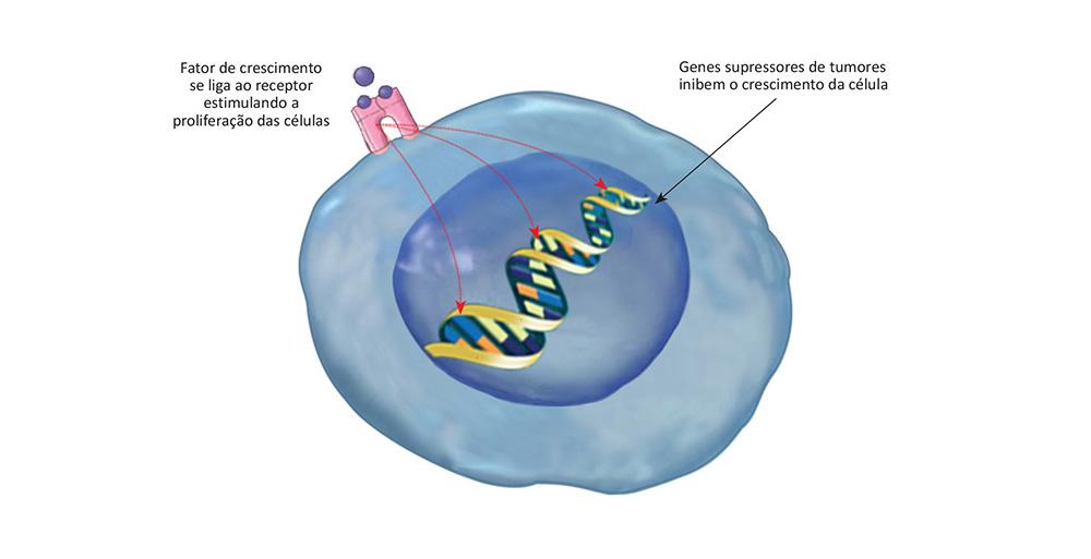 Em Quanto Tempo Um Cancer Se Desenvolve, Como O Cancer Se Desenvolve, Desenvolvimento Do Cancer, Quanto Tempo Um Cancer Demora Para Se Desenvolver, Quanto Tempo Demora Para Um Cancer Se Desenvolve, Quanto Tempo Um Cancer Leva Para Se Desenvolver, Ciclo Celular E Cancer, Divisão Celular E Cancer, O Que Desencadeia O, Desenvolvimento Do Cancer Na Celula, Quanto Tempo O Cancer Demora Para Se Desenvolver, O Desenvolvimento Do Cancer , Principais Fatores De Risco Para O Desenvolvimento Do Cancer, Celulas Cancerigenas, Células Cancerígenas, Celulas Cancerosas, Celulas Do Cancer, Formação Do Cancer, Celula Do Cancer, Como Ocorre O Cancer, Como Se Desenvolve O Cancer, Desenvolvimento Do Cancer, Carcinogenese, Carcinogênese, Como Surge O Cancer, Surgimento Do Cancer