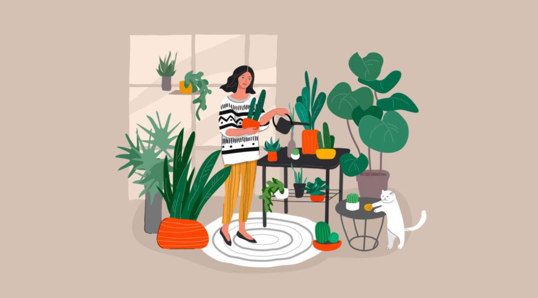 É Possível Cultivar Plantas Medicinais Em Casa