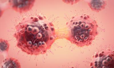Em quanto tempo o desenvolvimento do câncer acontece?