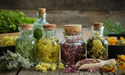 Uso de plantas medicinais para o tratamento do câncer